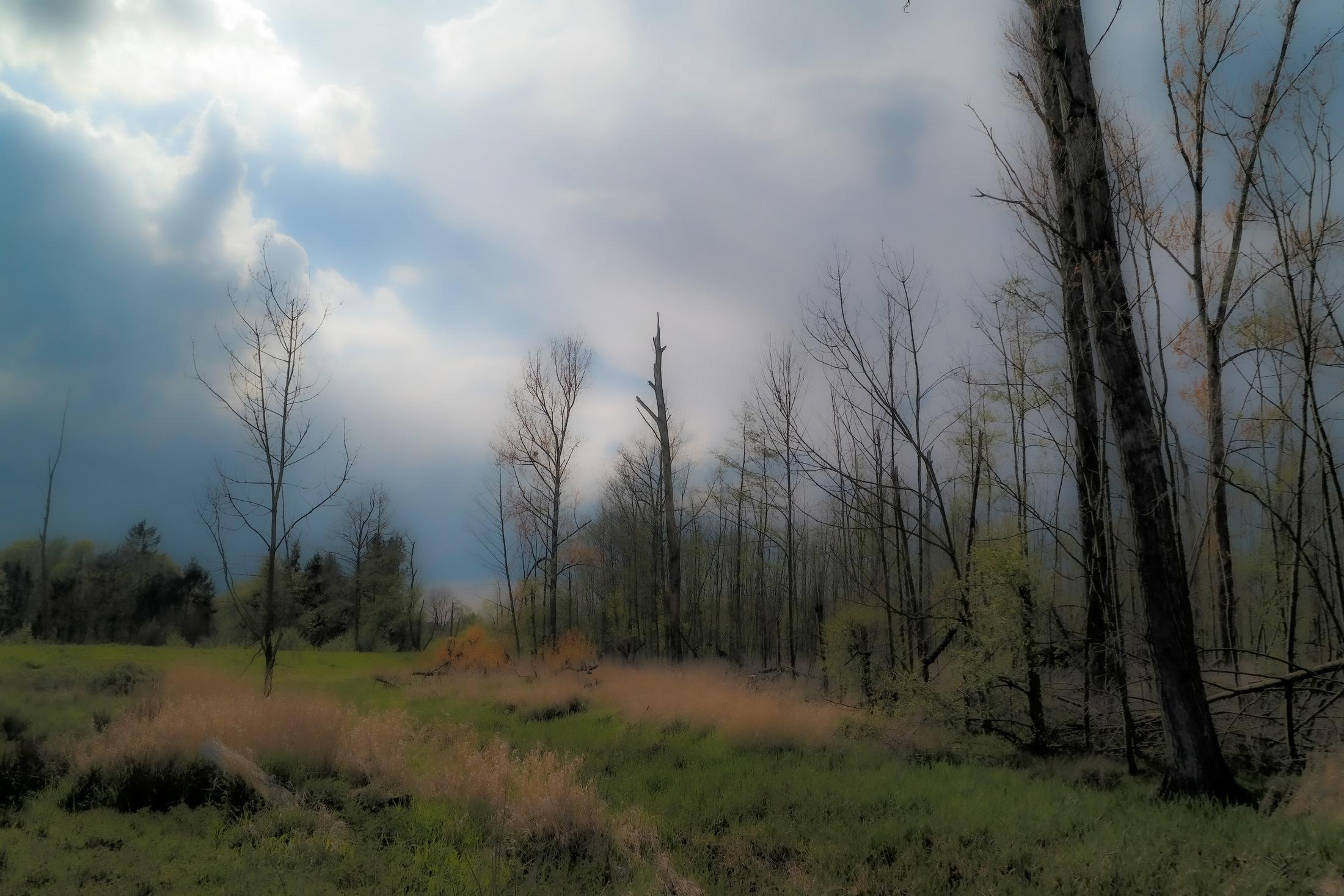Bis bald im Wald